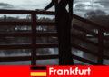Sensuel manager ledsagere i Frankfurt am Main forkæle deres kunder fra hoved til tå