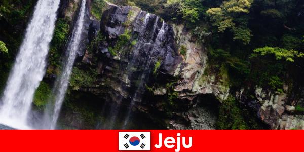 Jeju i Sydkorea den subtropiske vulkanske ø med fantastiske skove for udlændinge