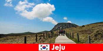 Turister vandrer gennem det fantastiske naturlandskab i Jeju Sydkorea