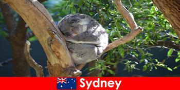 Destination Sydney Australien i den eksotiske zoologiske have med overnatning erfaring