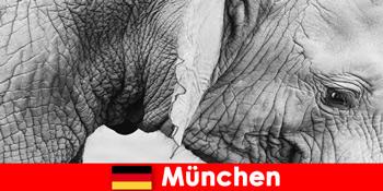 Særlig tur for besøgende til den mest originale zoologiske have i Tyskland München