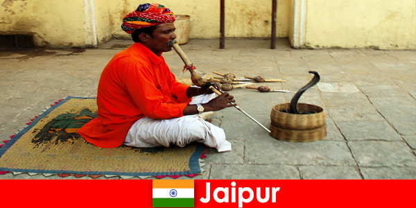 I Jaipur Indien oplever vacationers slangedanse og underholdning i de travle gader